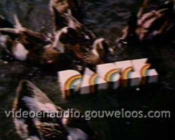 Nederland 1 - Pauze - Eenden (1980).jpg
