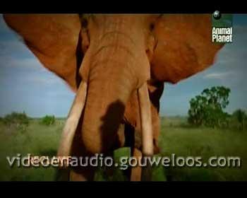 Animal Planet - Reclame Leader (01) (2006).jpg