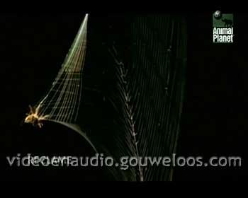 Animal Planet - Reclame Leader (03) (2006).jpg